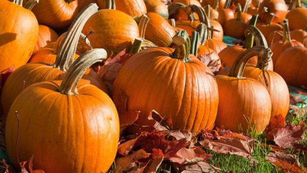Comment prendre soin de sa peau en automne ? Les bons traitements et produits pour votre peau